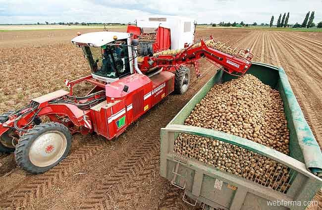 potato-harv