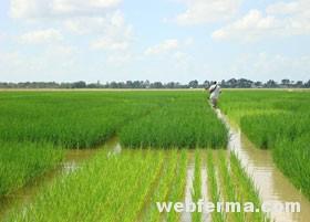 Методы полива по полосам, бороздам и орошением
