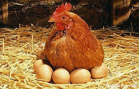 profit-egg