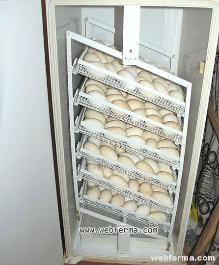 incubator-iph-5
