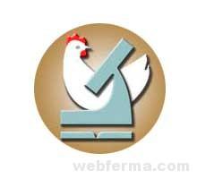 ВНИТИП (Генофонд): продажа породистой птицы и яйца