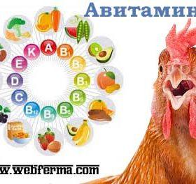 Авитаминоз у домашней птицы: признаки, лечение и профилактика