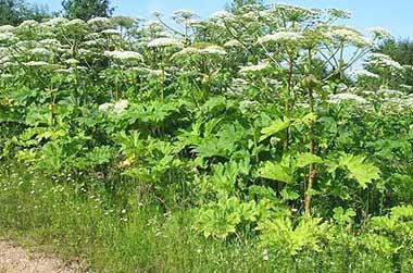Вредители полей, сада и огорода
